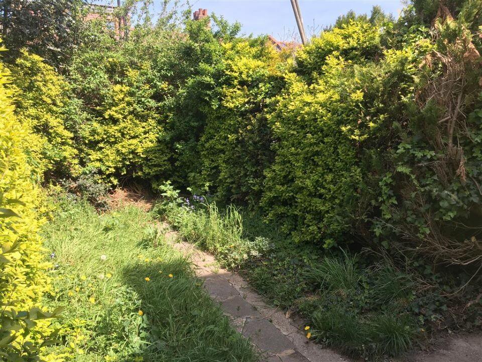 21 Denbigh Road, East Ham, London E6 3LF - garden
